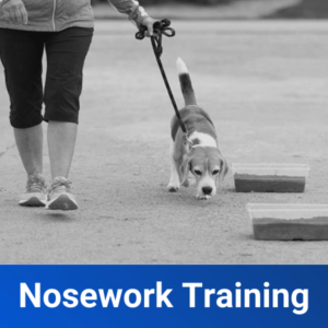 Nosework Training