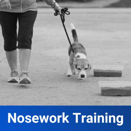 Nosework Training